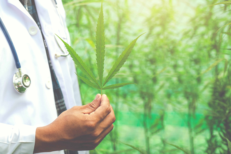 curso cannabis medicinal murcia