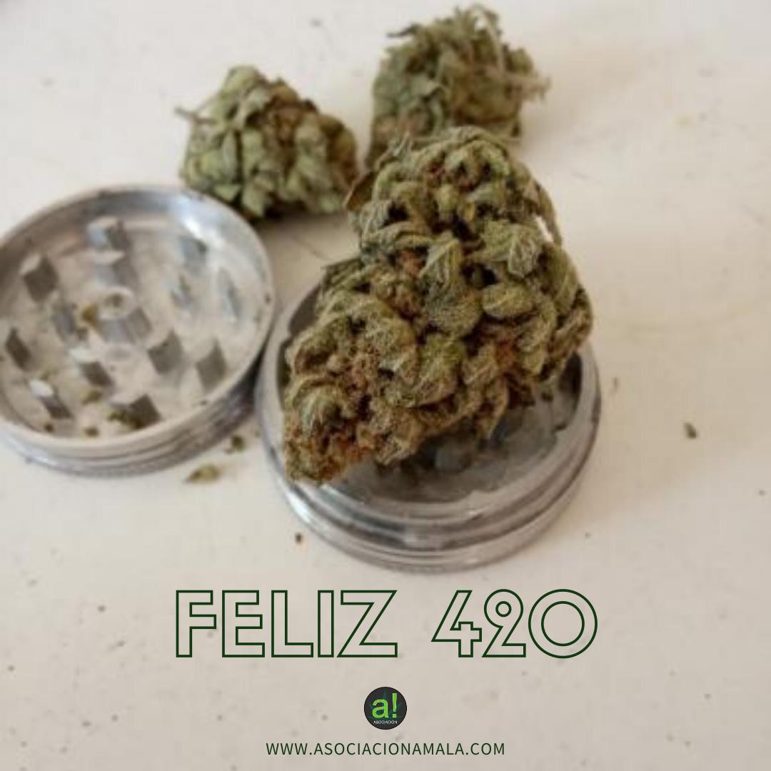 celebracion dia 420