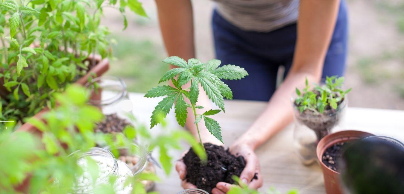 Beneficios del cannabis en la mujer
