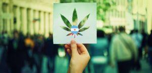 legalizacion autocultivo Argentina