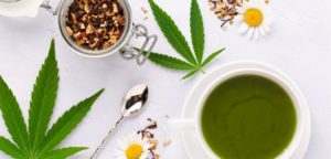 receta infusión cannabis medicinal