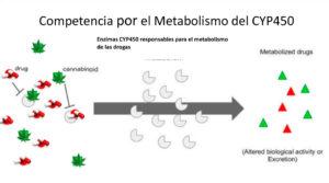 competencia-por-el-metabolito-CYP-450