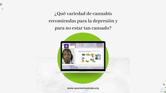 Qué variedad de cannabis recomiendas para la depresión y para no estar tan cansado